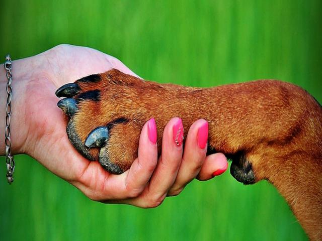 چند نکته بامزه راجع به سگها که نمیدانستید
