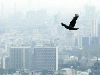 در هوای آلوده به این نکات دقت کنید