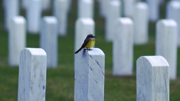 قوانین توییتر بعد از مرگ