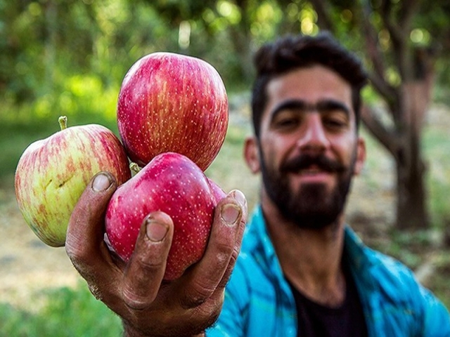 ماجرای سیبهایی که بجای فروش در بازار شب عید ضایعاتی میشوند