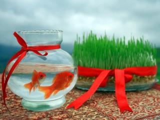 چه دلایل بر مرگ ماهی قرمز نوروز تاثیر دارند؟