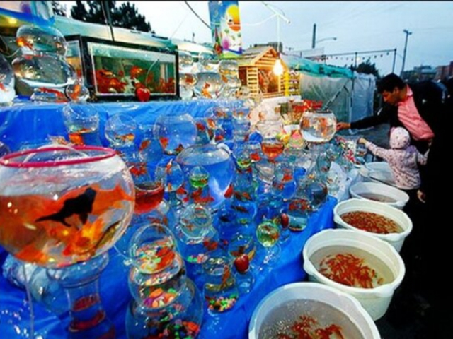 نحوه نگهداری ماهی قرمز و بهداشت آن برای پیشگیری از کرونا