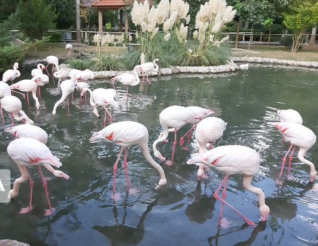 باغ پرنداگان