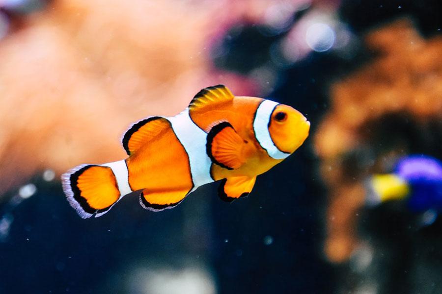 ماهی اقیانوس