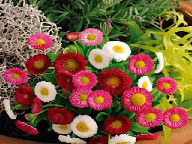 معرفی گل مینای چمنی ؛ یک گل بهاری برای زیبا کردن فضای خانه