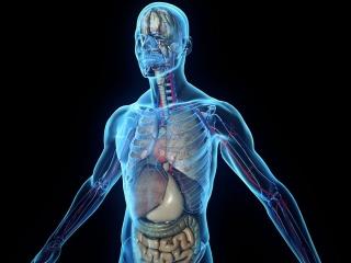 دانستنیهای جالب در مورد بدن انسان