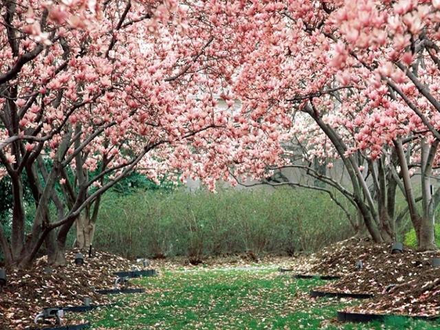 15 اردیبهشت ، جشن میانه بهار
