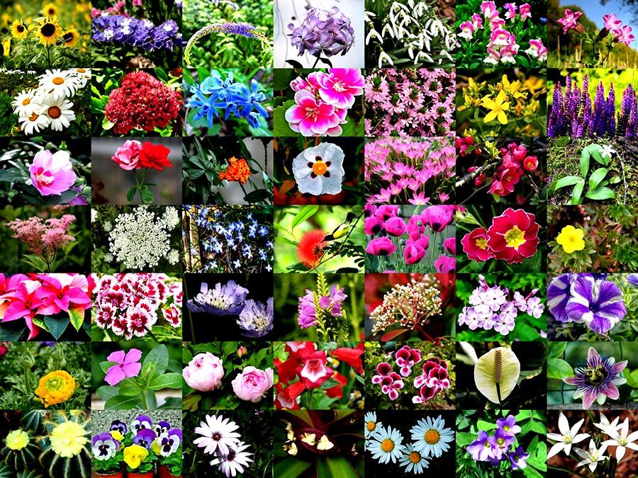 25 خرداد ، روز گل و گیاه