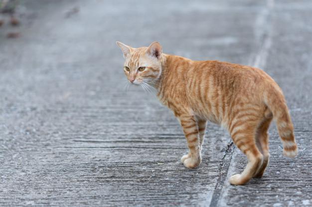 گربه های خیابانی در زمستان
