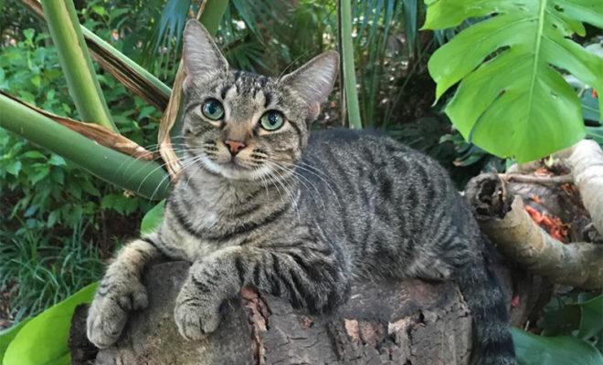 گربه های خیابانی ایران