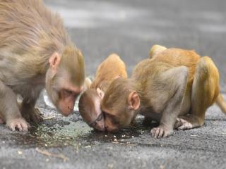 آبله میمون اولین قربانی خود را در چین به ثبت رساند