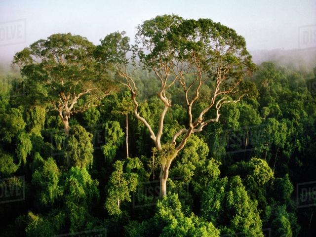 آشنایی با جنگل های ایران