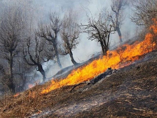 علت آتش سوزی در جنگل های مریوان چه بود؟
