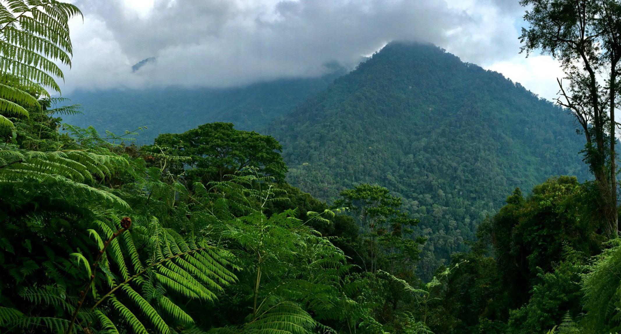 جنگل زاگرسی