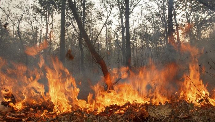 آتش سوزی جنگل های مریوان