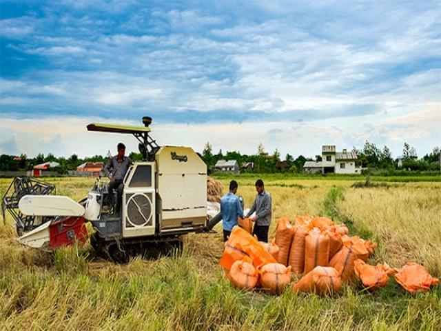 خسارت شدید خشکسالی امسال به زمین های کشاورزی استان گلستان