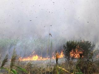 آتش سوزی گسترده در تالاب انزلی همچنان ادامه دارد