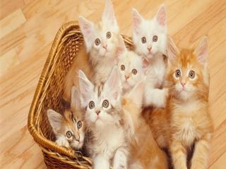 8 آگوست ، روز بین المللی گربه