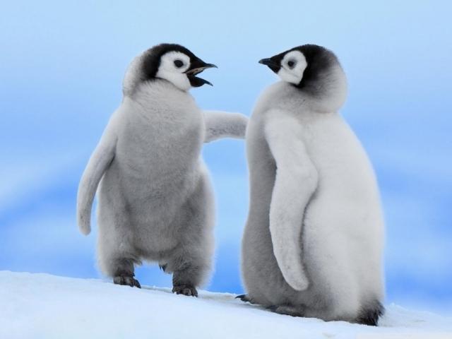 پنگوئن ها، پرندگانی که پرواز نمی کنند!