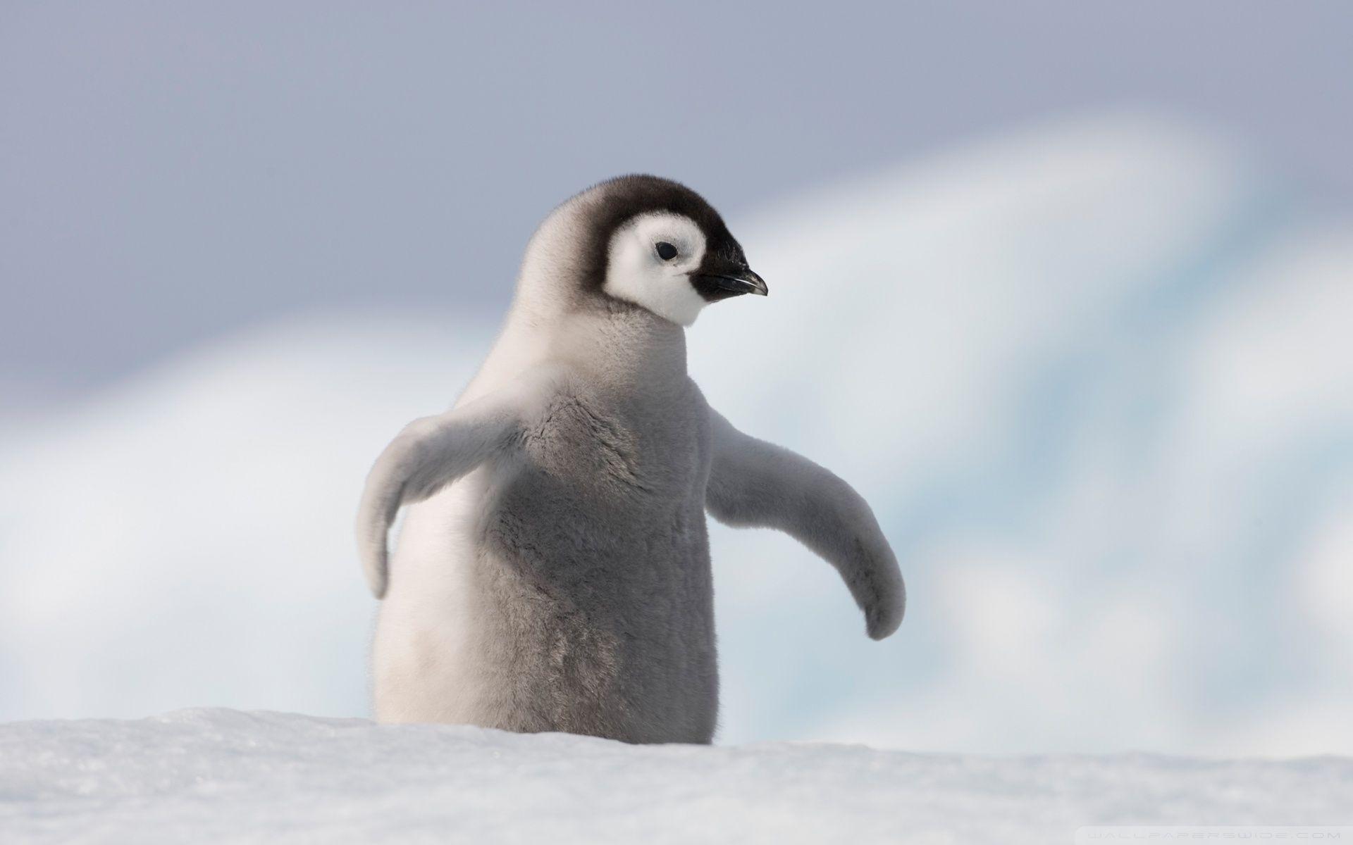 پنگوئن ها پرواز میکنند؟