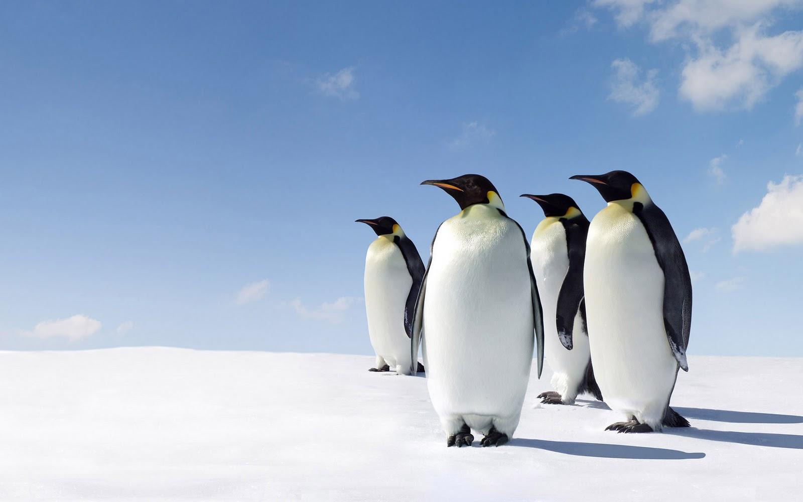 پنگوئن پستاندار است؟