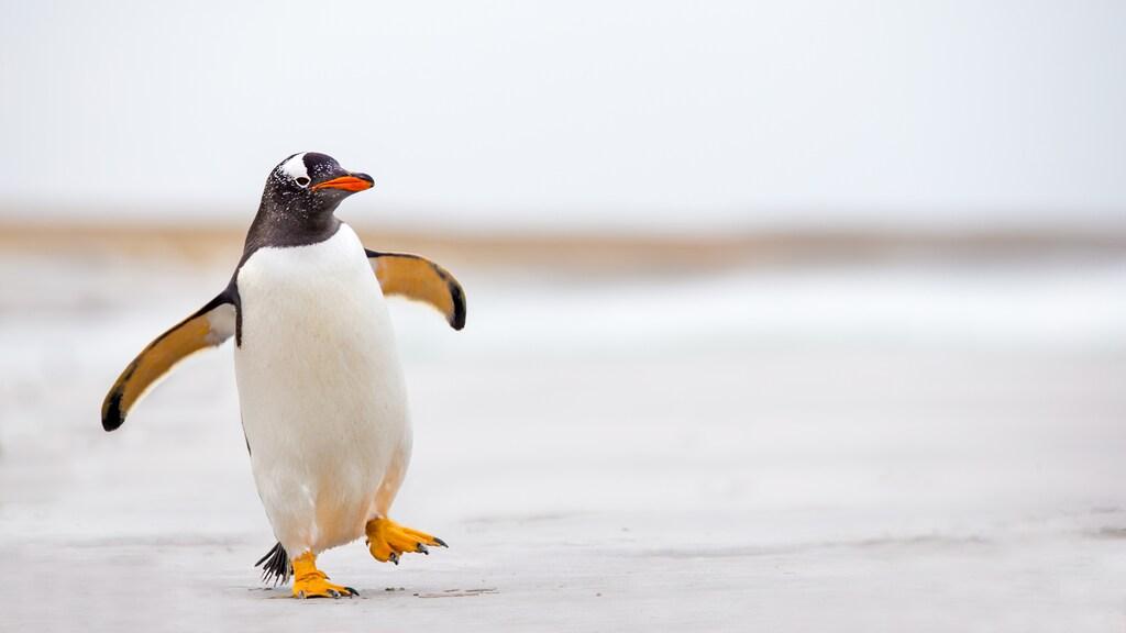 محل زندگی پنگوئن ها کجاست