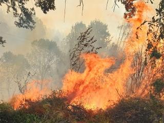 آتش سوزی در ارتفاعات کوه نور کهگیلویه و بویراحمد