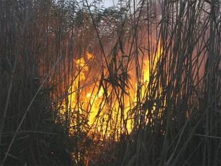 عمدی بودن آتش سوزی تالاب انزلی تایید شد