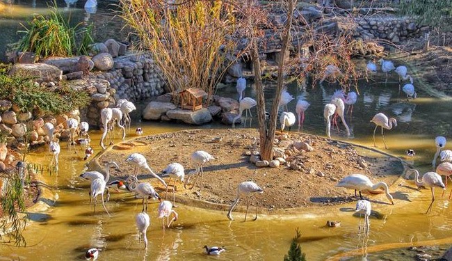 باغ پرندگان تهران کجاست