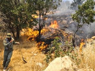 آتش سوزی جنگل های دارشاهی دنا مهار شد