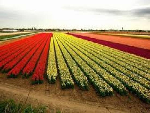 مطالب کشاورزی