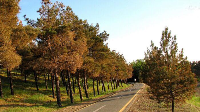 پارک جنگلی چیتگر-chitgar park