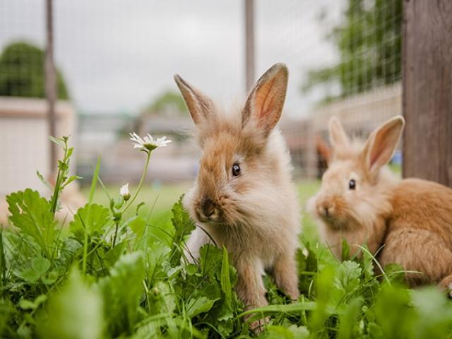 همه چیز در مورد خرگوش ها