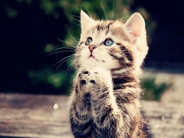 10 نکته ضروری در نگهداری گربه خانگی