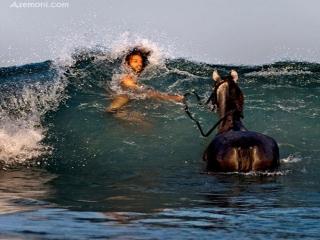 تصاویری زیبا از جانوران