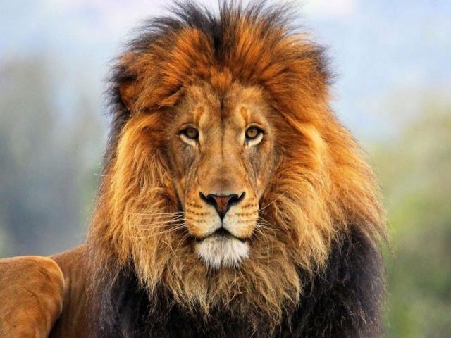 جانوران و حیوانات منقرض شده و در حال انقراض ایران