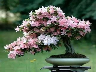 پرورش و نگهداری از گلها و گیاهان آپارتمانی