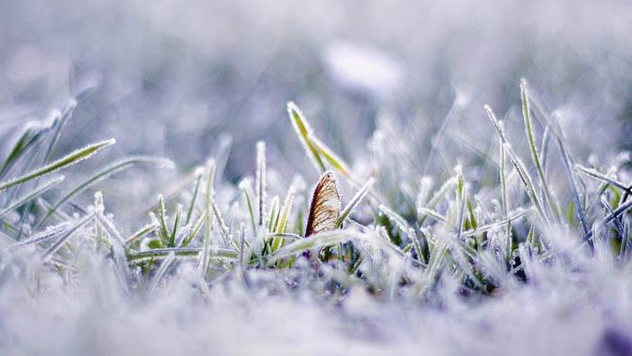 برف10