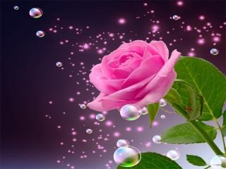 گل رُزهای رنگارنگ