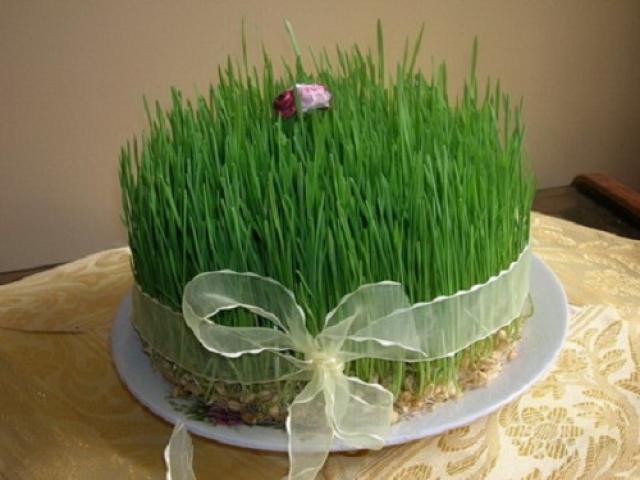 روش کاشت سبزه عید نوروز