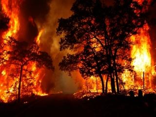 علت آتش سوزی در جنگل ها