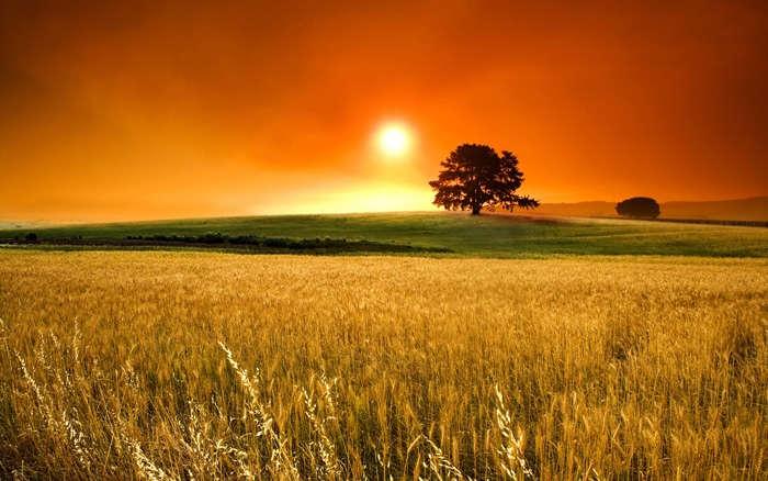 Wheat-field-sunset-high-definition-wallpapers-free-download-outstanding-hd-wallpapers-of-sunset-field