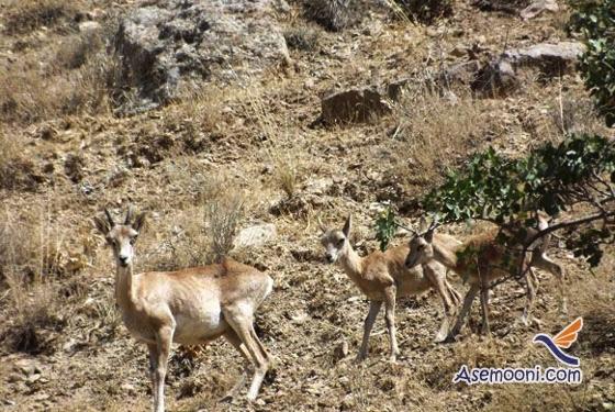 national-park-khojir(3)