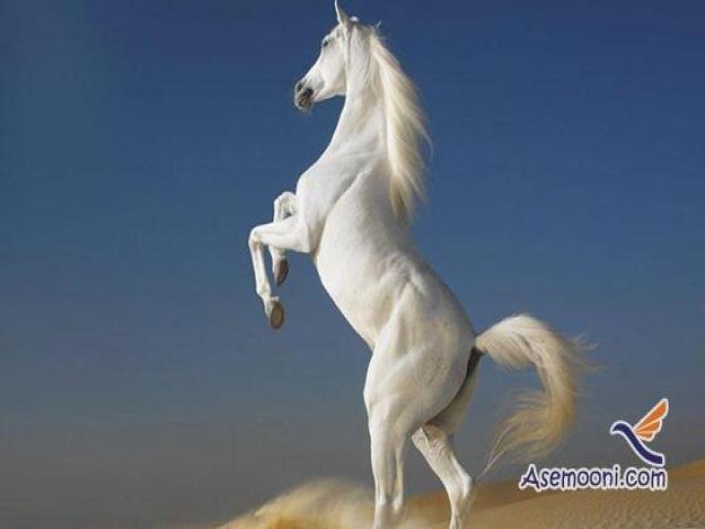 عکس های دیدنی از اسب های زیبا