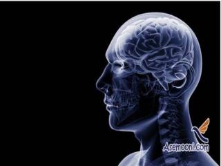 سلول های جدید مغزی شناسایی شدند