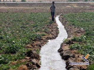مزارع حاشیه تهران همچنان درگیر آبیاری با فاضلاب