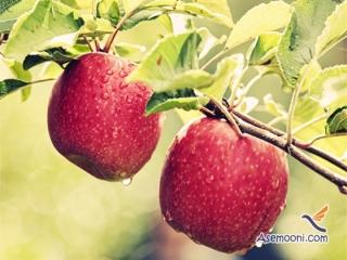 داستان فروش سیب از زبان شیوانا