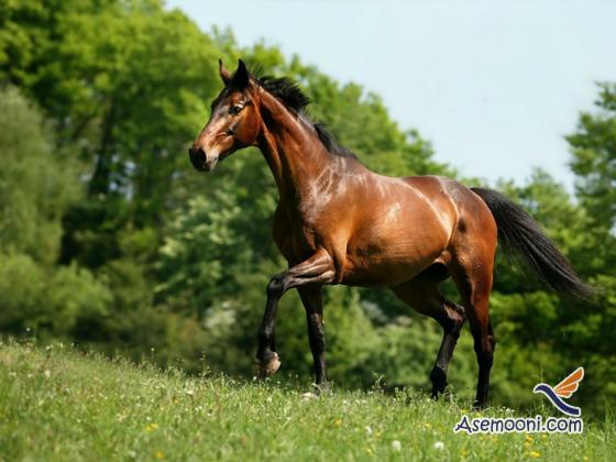 Horse photos(1)