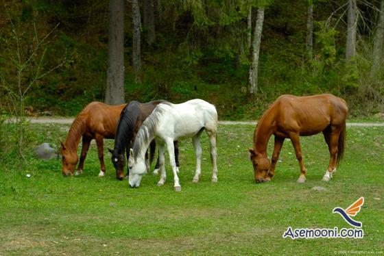 Horse photos(11)