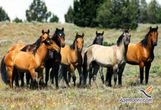 Horse photos(12)